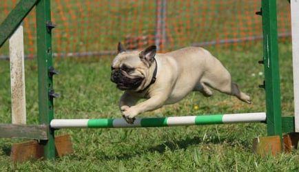 Investigamos y encontramos los 4 mejores Cursos a Distancia de Adiestramiento Canino Obediencia Básica