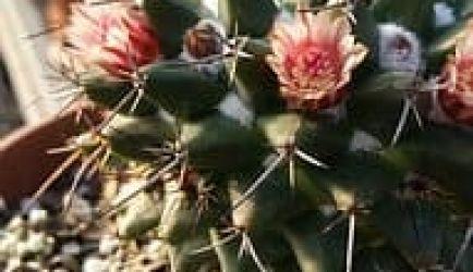 Los Cursos más buscados para que estudies y seas Horticultor