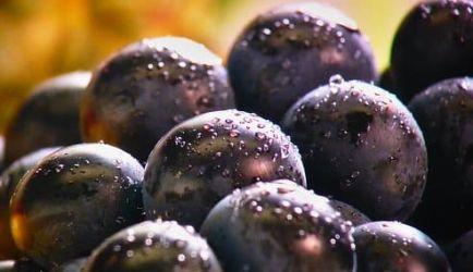 Estudiar Microbiología e Higiene Alimentaria a Distancia: 6 Cursos para crecer en el ámbito profesional