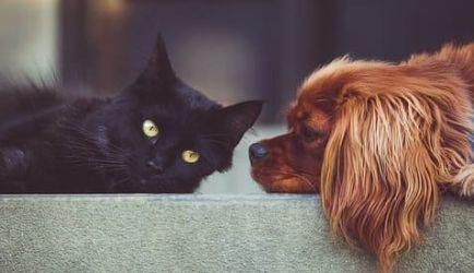 ¿Quieres mejorar tu futuro profesional? Aquí tienes 6 Cursos de Psicología Canina y Felina