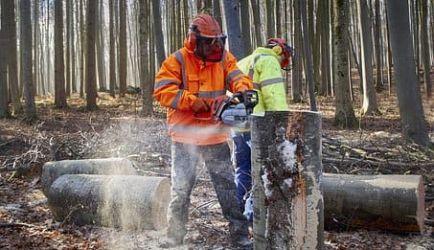 7 Cursos de Formación que te recomendamos para que consigas el título de Trabajador Forestal