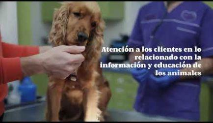 Descubre los puestos de trabajo y cuánto gana un Auxiliar Veterinario de Animales de Compañía