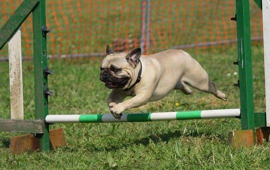 Curso de Adiestramiento Canino Obediencia Básica