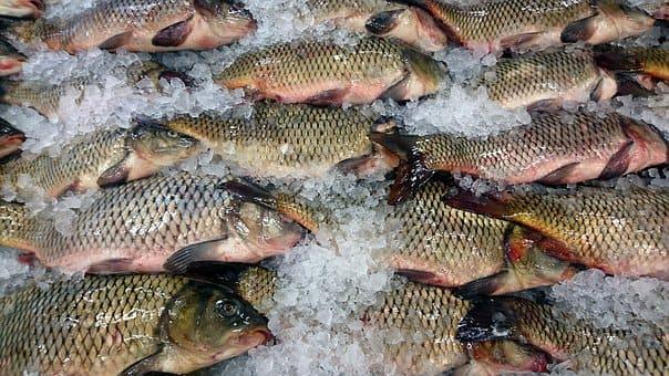 Curso de Elaborador de Conservas de Productos de la Pesca