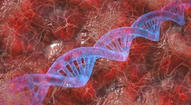 Curso de Técnicas de Análisis Cromosómicos y Ácidos Nucleicos