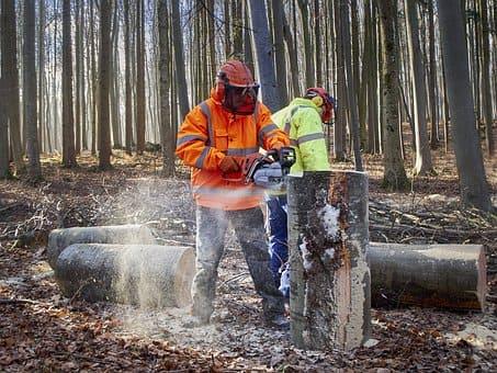 Curso de Trabajador Forestal