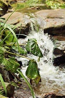 FP Trabajos Forestales y de Conservación del Medio Natural